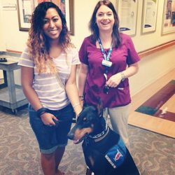 Therapy Dog Work