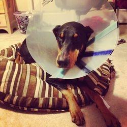 Poor pup