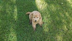 Handsome pup - 9 weeks