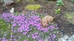 Checking out my gardens - 9 weeks