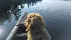 First canoe ride at 15 weeks