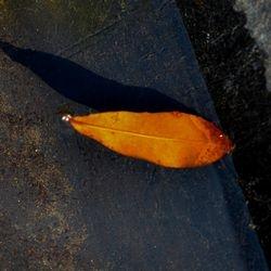 Floating Leaf
