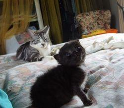 Rastus and his uncle Kosh