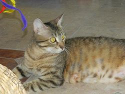 Cassie - now available for adoption