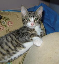 Ben - available for adoption