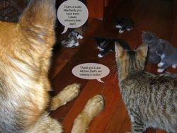 Cassie Lupa and the kittens