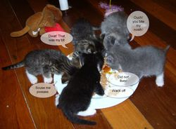 Introduction to the food bowl