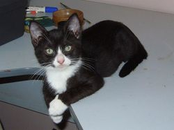 Pandy - available for adoption