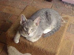 Kitten at 14 weeks Adopted