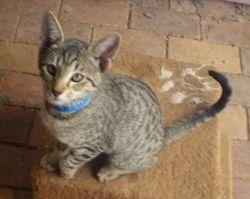 Kitten at 14 weeks