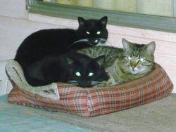 Jacinta, Preshie and Teddy