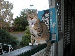 Bailey - lost in Brisbane 1 July 2009