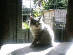 Mia's kitten at 9 weeks