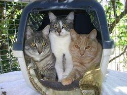 Jerry, Camila and OJ