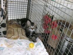 Little Rescue kitten