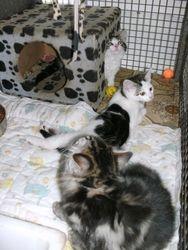 Three flood rescue kittens