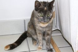 Millie - ADOPTED