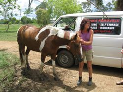 A horse suffering fungal infections after prolonged exposure to flood waters