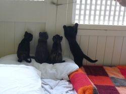 4 little feral kittens