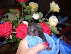 Rastus the little orphan