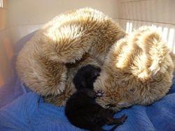 Rastus the little orphan & security teddy