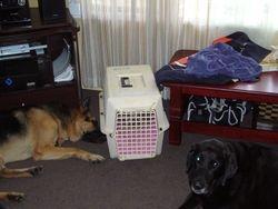 Rastus, Boo and Lupa