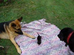 Lupa, Boo and little Rastus