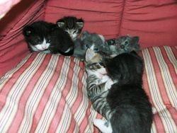 Cassies kittens