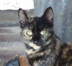 Taffy - Available for adoption