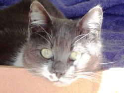 Sox - Available for adoption