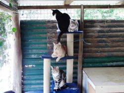 Shiloh (adopted), Jack, Scampy and Scrap