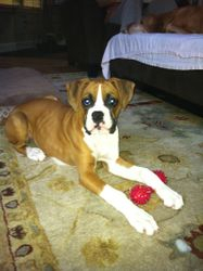 Ruby - Soco & Rocky's girl