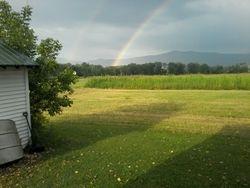 le corn field