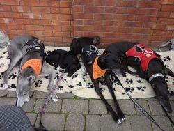 Belles First Fund raising event for Greyhound Gap.