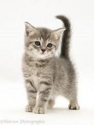Jix's Kitten, Delta!