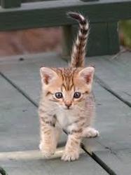 Tessa's Cat, Elvesden!