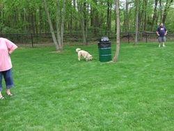 Small Dog Area