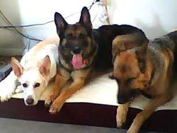 Risky, Ashra and Foxy