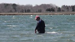 Raking the sandy bottom fo clams
