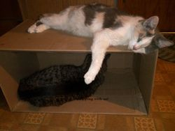 Kitty Bunk Beds - July 23, 2014