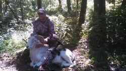 Texas Dall Sheep