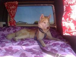 Spirit in his campervan