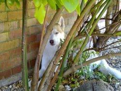 Spirit hiding