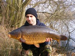 16lb+ elsons common