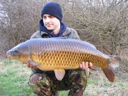 23lb+ elson common