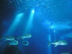 Ou talvez nas profundezas de um oceano? (1)