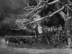 Nazareth Flock