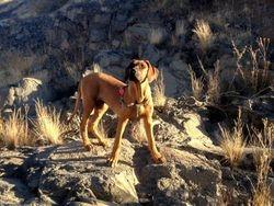 Early morning walk Clacks Canyon Az