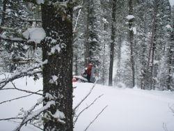 Cam riding the Trees -Kallispel