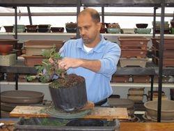 Manish styling his tree